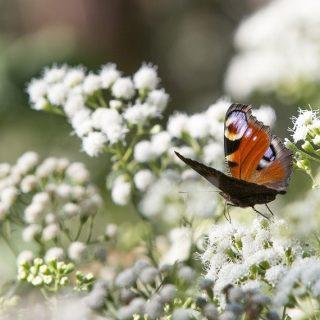révélateurs-de-biodiversité