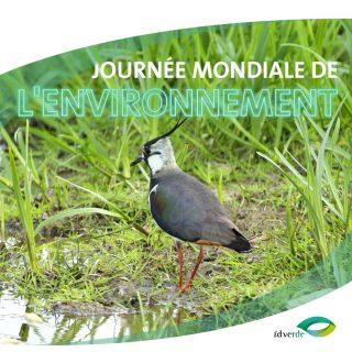 journée-mondiale-de-l-environnement