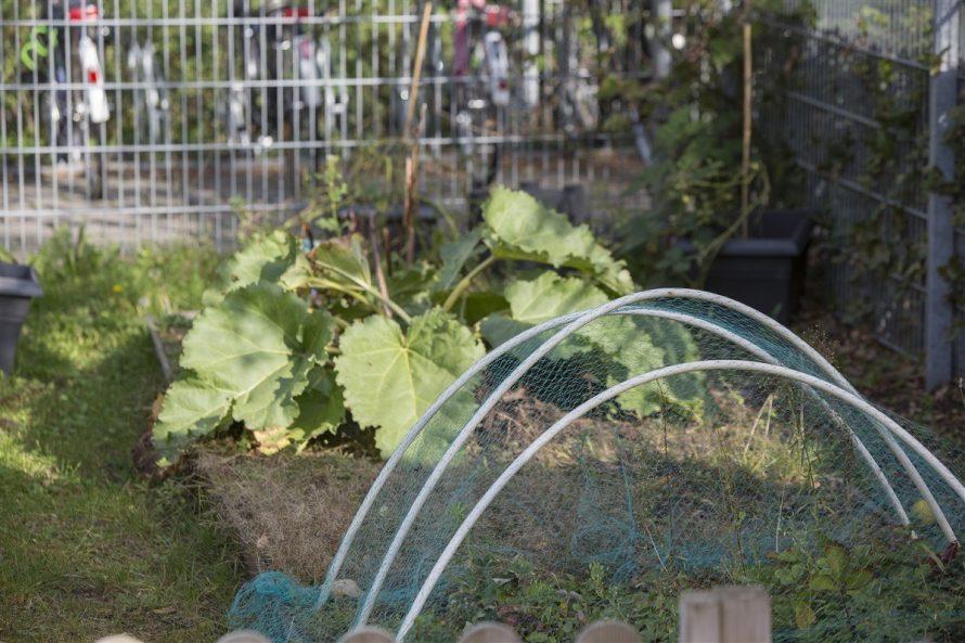 entretien-potager-jardin