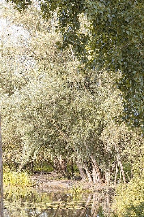 genie-ecologique-idverde